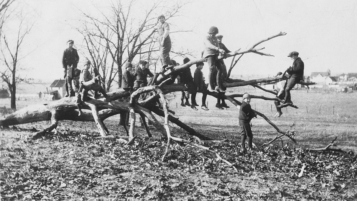 Kids hanging out on a tree limb